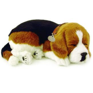 Beagle Bundle