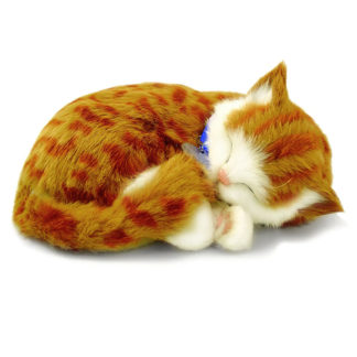 Orange Tabby Bundle
