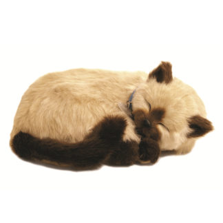 Tan Siamese Bundle